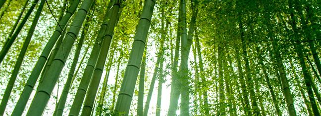 若竹をイメージ
